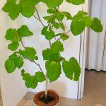 観葉植物13